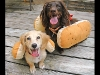 hot_dogs04