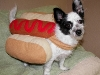 hot_dogs09
