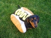 hot_dogs11