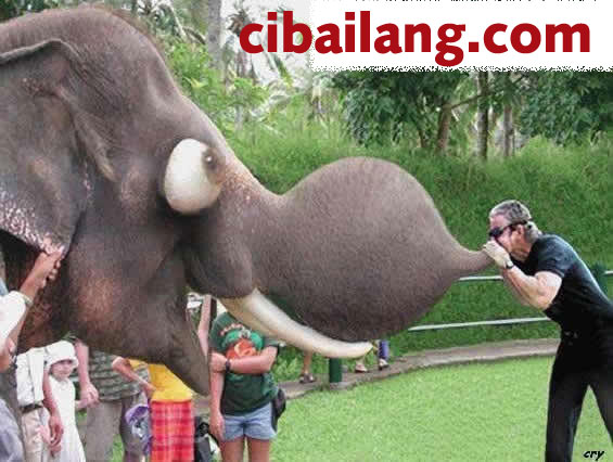 blowing an elephant