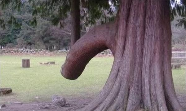 nature_sex_symbols_11
