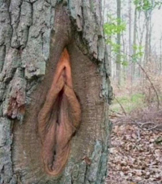 nature_sex_symbols_13