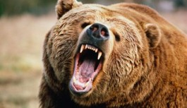 Grizzly bear pushes glass box with screaming woman inside for bizarre Japanese game show