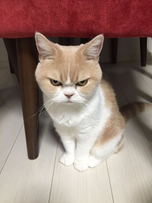 angry cat 9