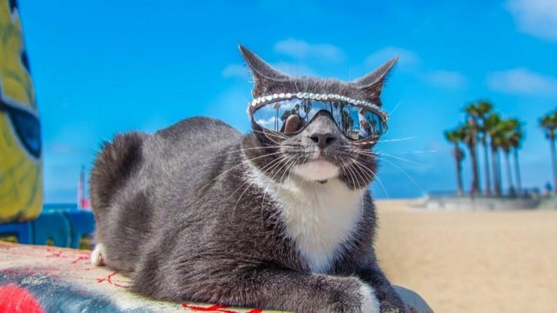 cat shade 5