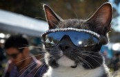 The most stylish cat in the world, and he wears sunglasses!