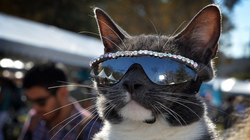 cat shades 10
