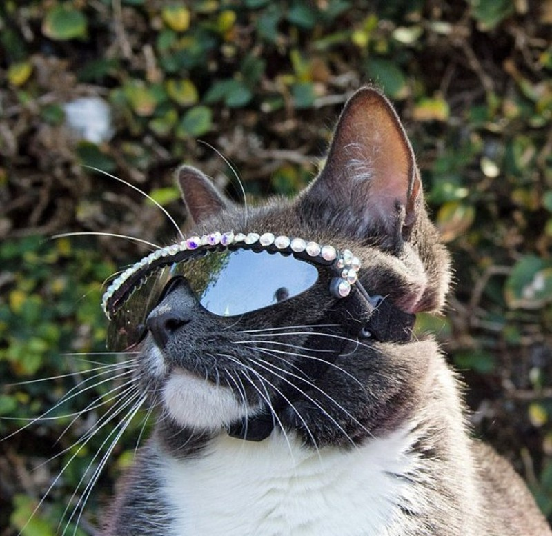 cat shades 11