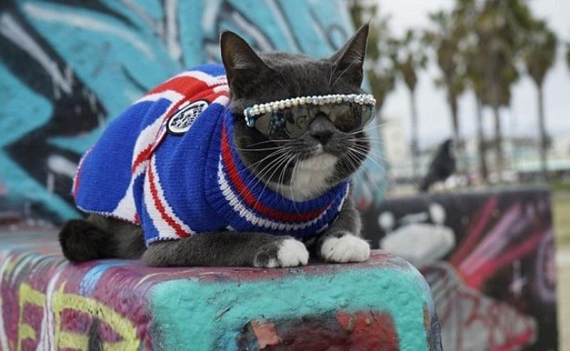 cat shades 12