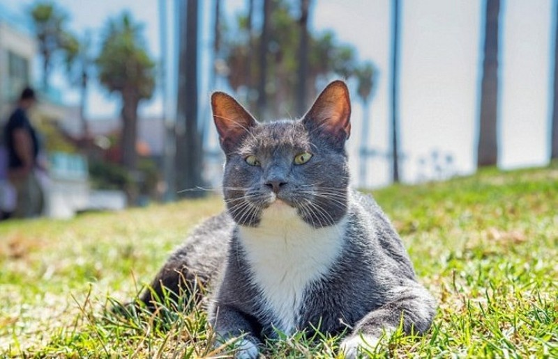 cat shades 13