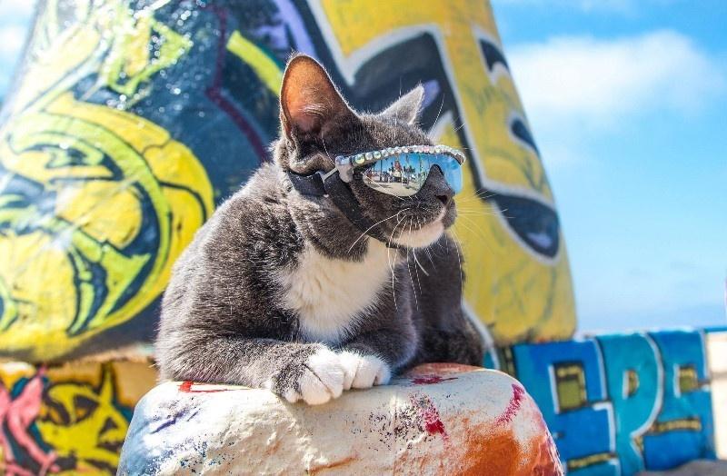 cat shades 7