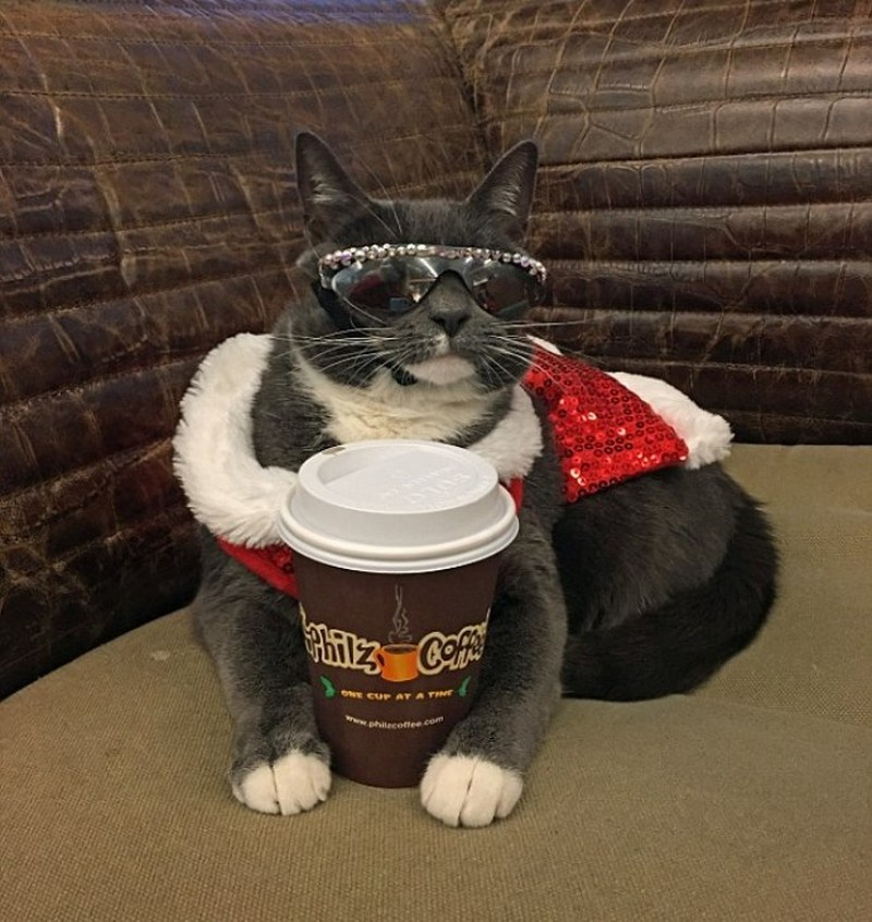 cat shades 8