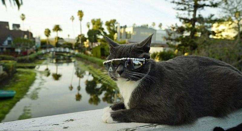 cat shades2