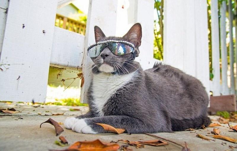 cat shades3