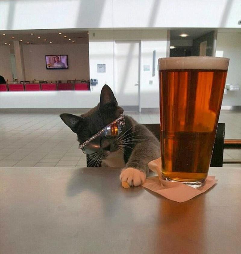 cat shades4